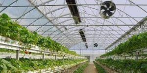 گرماتاب در گلخانه، مرغداری و دامداری 2