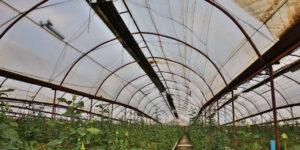 گرماتاب در گلخانه، مرغداری و دامداری 8