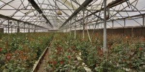 گرماتاب در گلخانه، مرغداری و دامداری 7