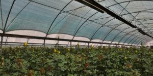 گرماتاب در گلخانه، مرغداری و دامداری 6