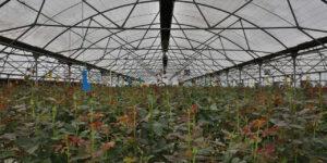 گرماتاب در گلخانه، مرغداری و دامداری 1