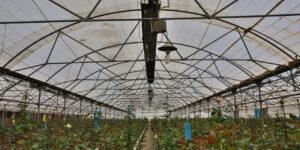 گرماتاب در گلخانه، مرغداری و دامداری 3